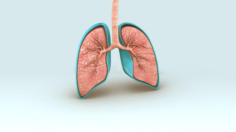 Ademhalingssysteem vector illustratie