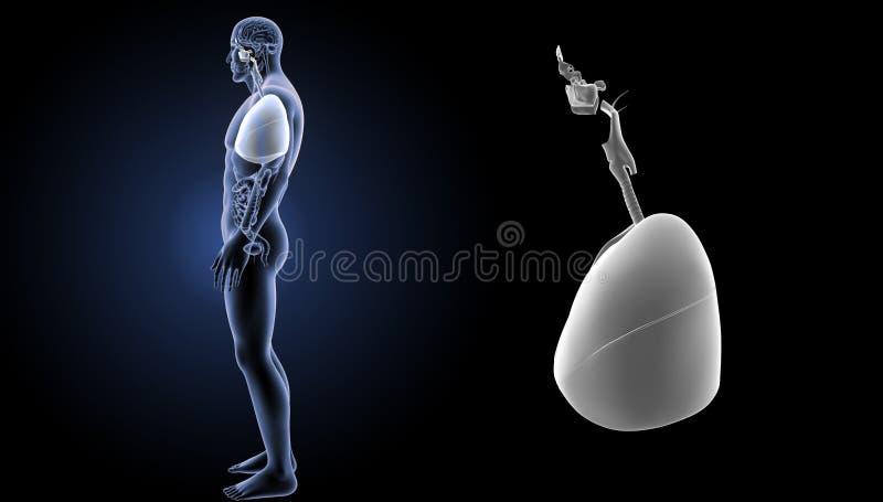 Ademhalingssysteem en hartgezoem met organen zijmening royalty-vrije illustratie