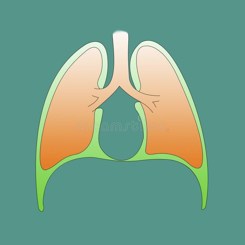 Ademhalingssysteem infographic van het borstvlies op een groene backgrou vector illustratie