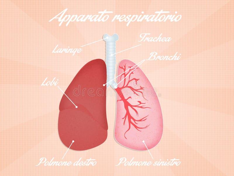 Ademhalingssysteemdiagram vector illustratie