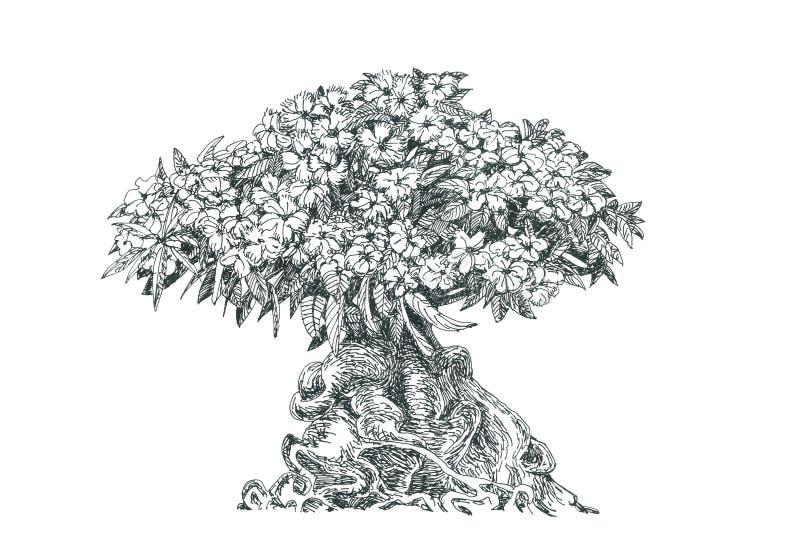 Adenium, drzewo, bonsai, rysunkowy pióro ilustracja wektor