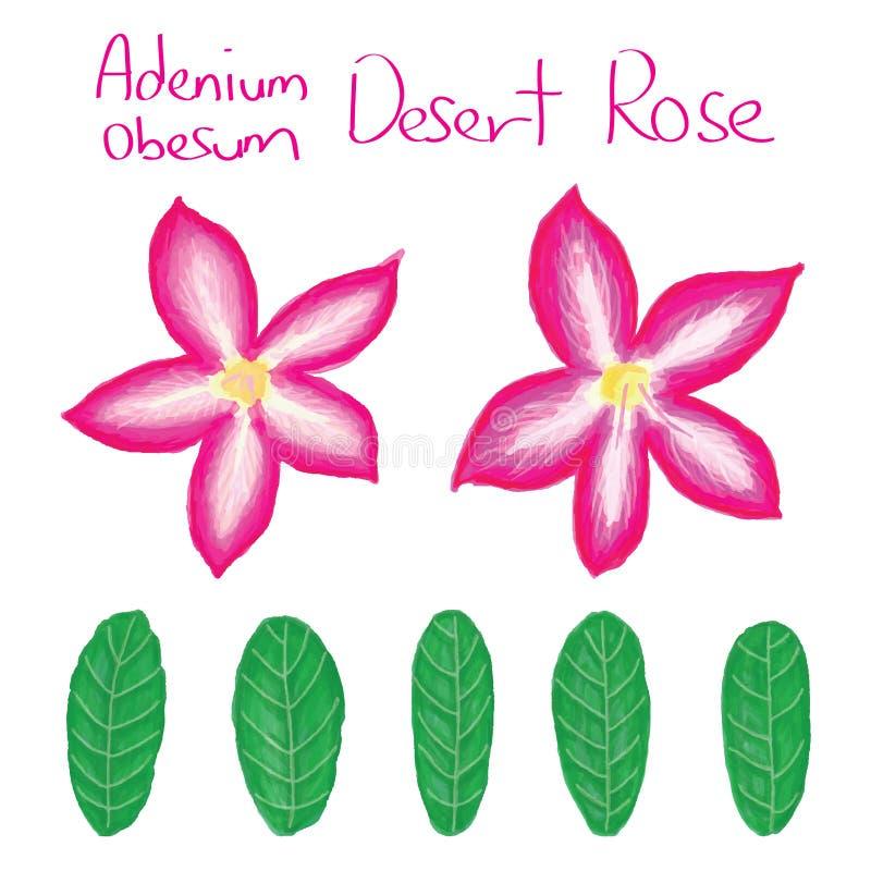 Adenium Obesum-Satz stock abbildung