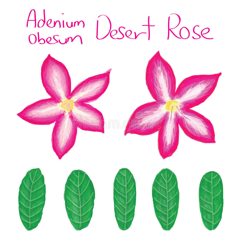 Adenium Obesum set ilustracji