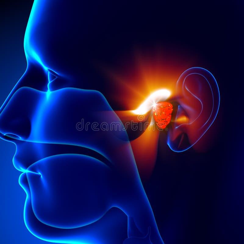 Adenoids - Ear. Pain illustration, infectious