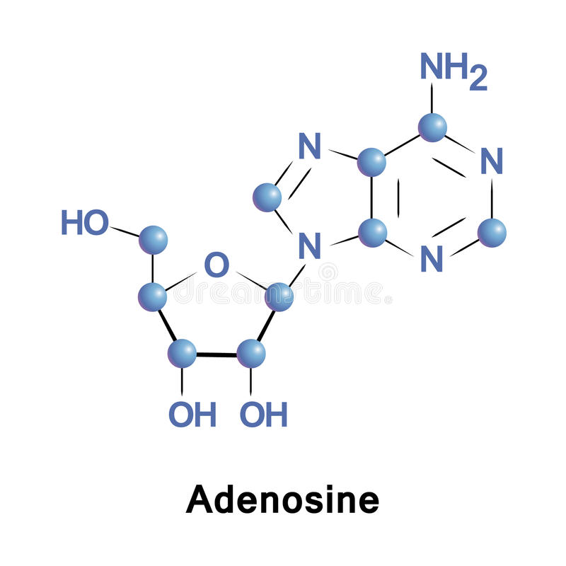 Adenosine är en purinenucleoside royaltyfri illustrationer