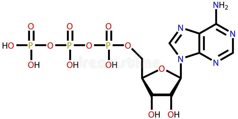Adenosine triphosphate (ATP) structural formula stock illustration