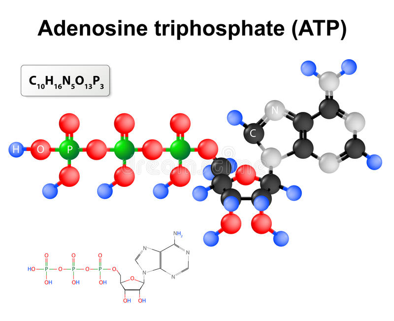 Adenosinetriphosphate ATP vektor illustrationer