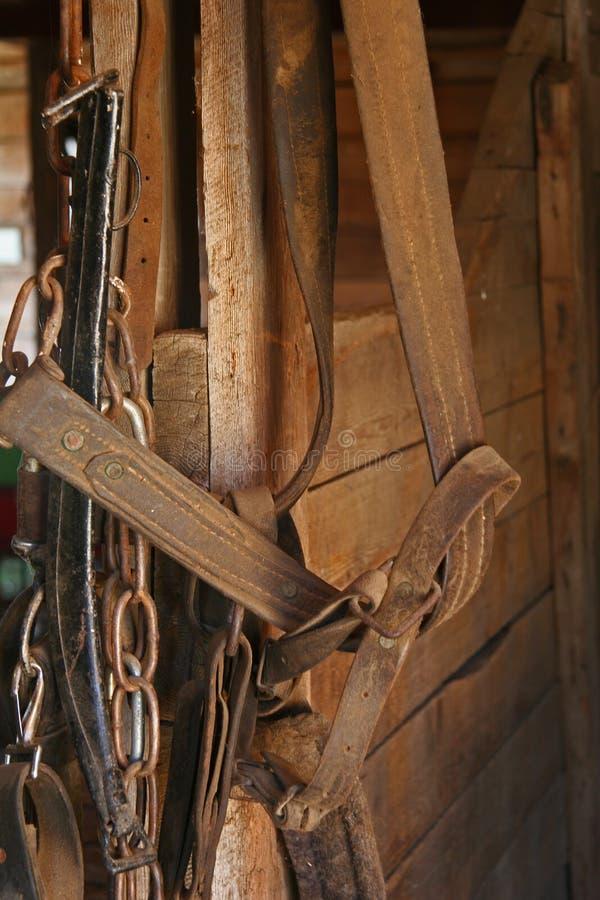 Aderenza del cavallo fotografia stock libera da diritti