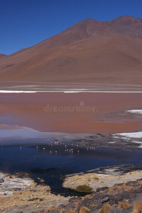 Adeus a Laguna Colorada foto de stock royalty free