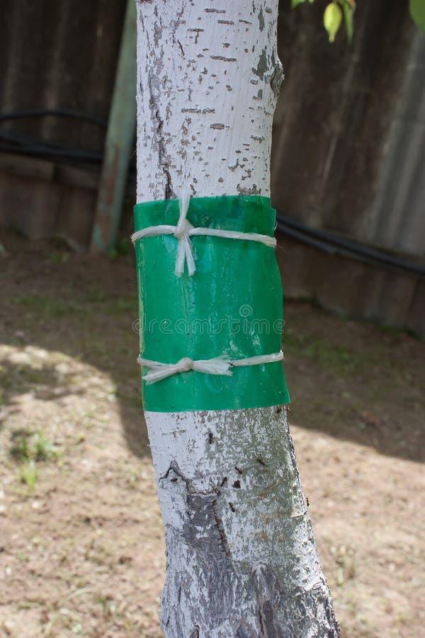 Adhezyjna taśma ochraniać drewno od mrówek zdjęcie royalty free
