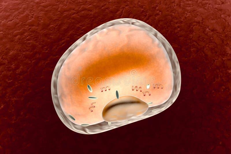 Adipocyte ist für Ansammlungsenergie, -korpulenz, -Gewichtszunahme und -Gewichtsverlust verantwortlich vektor abbildung