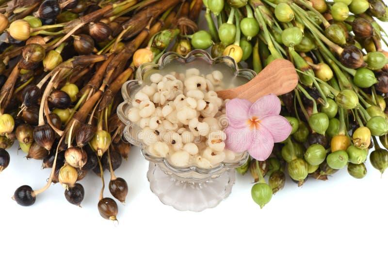 Adlay, Adlay millet, Job's tears, Millet (Coix lachryma-jobi. L.).boil. royalty free stock image