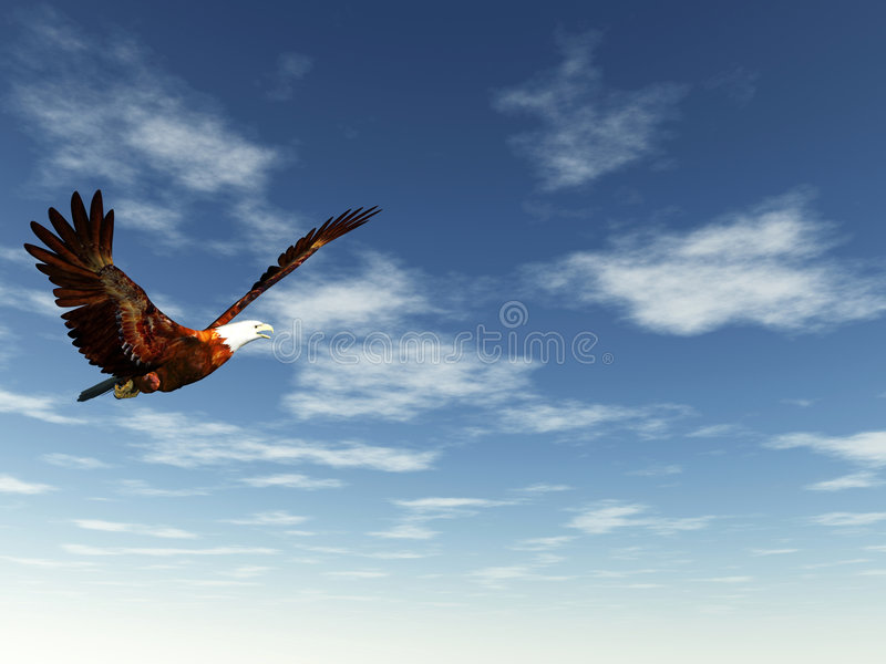 Adler lizenzfreie stockfotografie