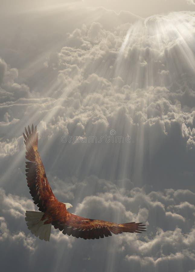 Adler im Flug über den Wolken vektor abbildung