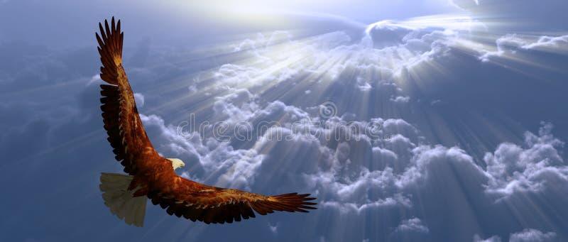 Adler im Flug über ihnen Wolken lizenzfreie abbildung