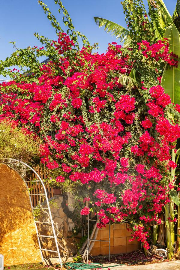 A admirablement décoré la maison lumineuse de fleurs, haie photos stock