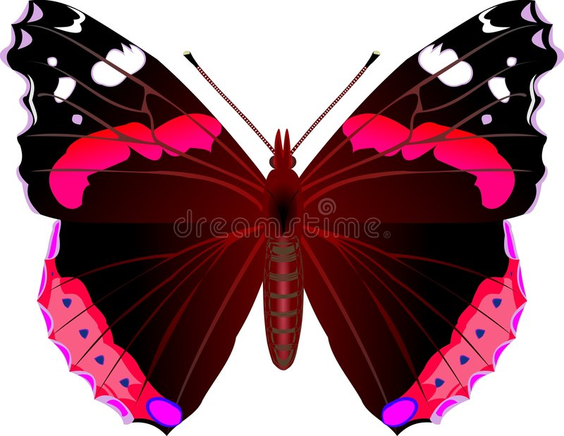 Admiral. Butterfly stock illustration
