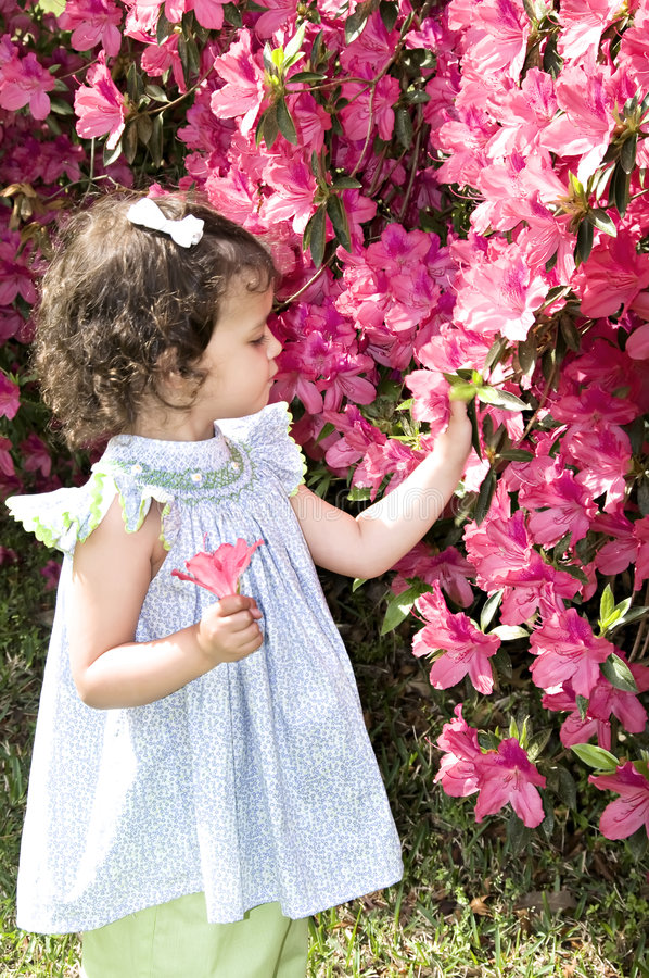Download Admiring Azaleas stock image. Image of content, expression - 7117641
