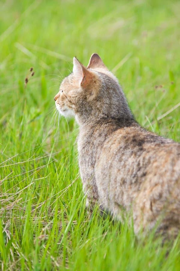 Admiring nature stock photo