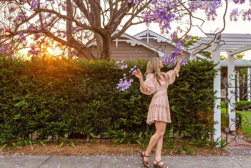 Admiring the purple Jacaranda tree flower clusters stock photos