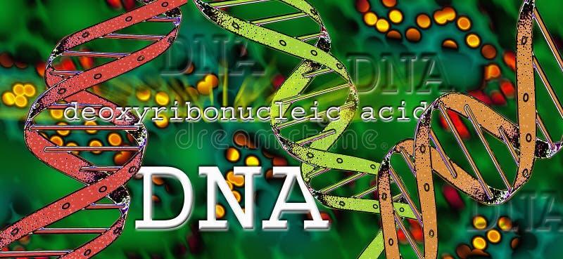 ADN - Ácido Deoxyribonucleic ilustração stock