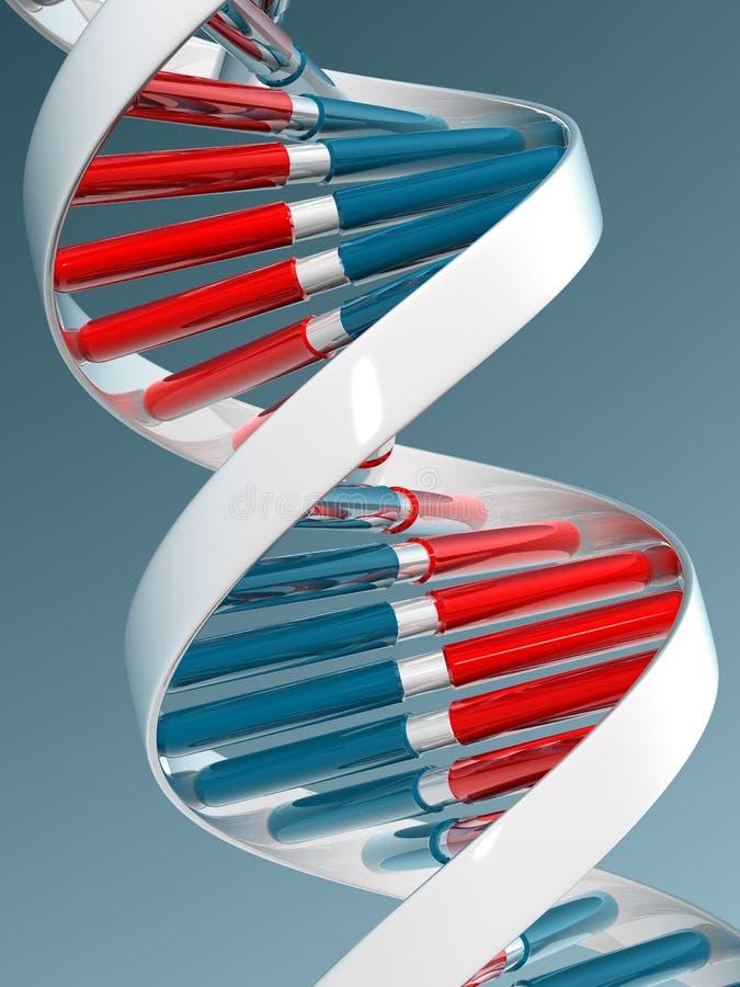 ADN ilustração royalty free