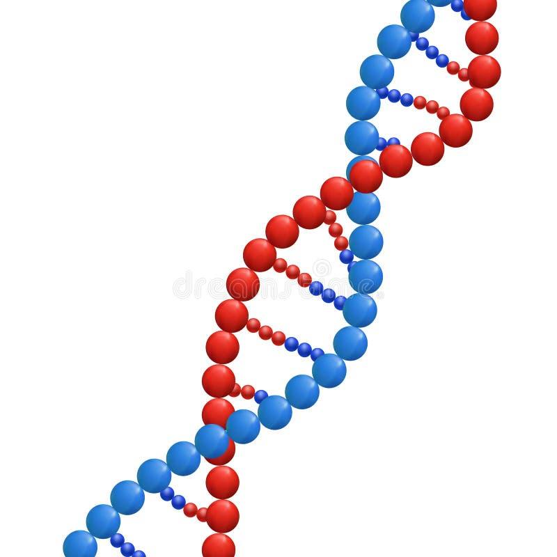 ADN, conceito da bioquímica, ilustração do VETOR isolada no fundo branco, costa abstrata do ADN ilustração royalty free
