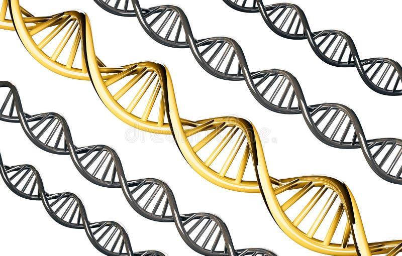 ADN d'or avec de l'ADN d'argent, gène dominant, d'isolement sur le fond blanc illustration libre de droits