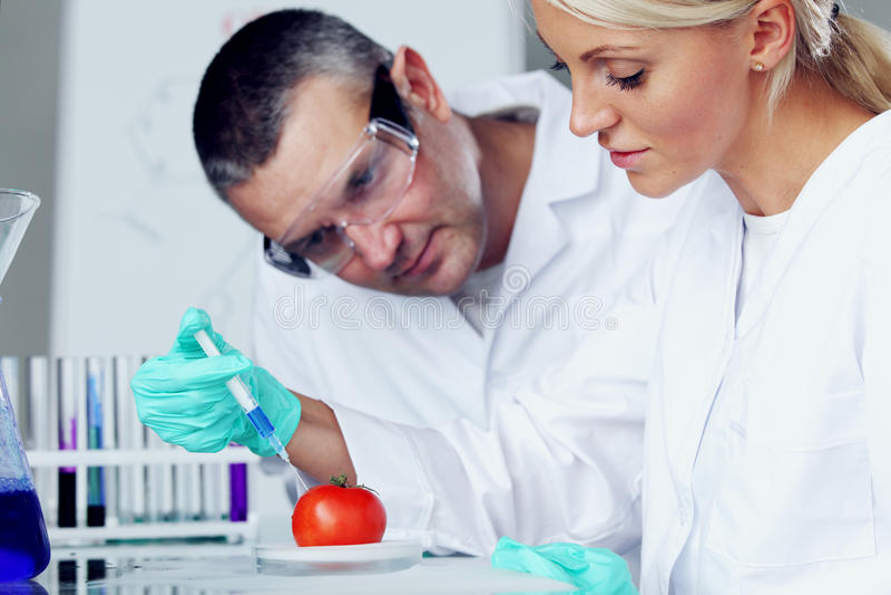 ADN do tomate imagem de stock