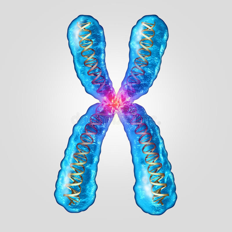 ADN génétique de chromosome illustration stock