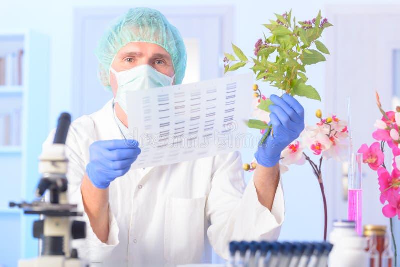 ADN GMO de Analizing imagens de stock royalty free