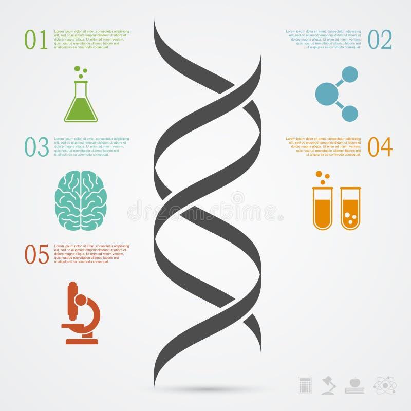 ADN Infographic illustration de vecteur