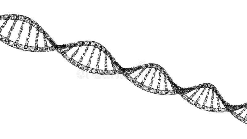 ADN, medicina modelo da hélice e linhas da conexão de rede isolados no fundo branco Estrutura futurista abstrata da tecnologia de ilustração do vetor