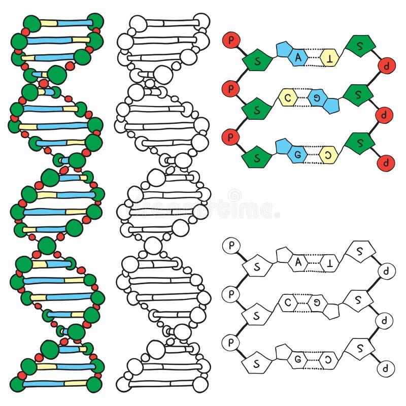 ADN - modelo da molécula da hélice ilustração stock