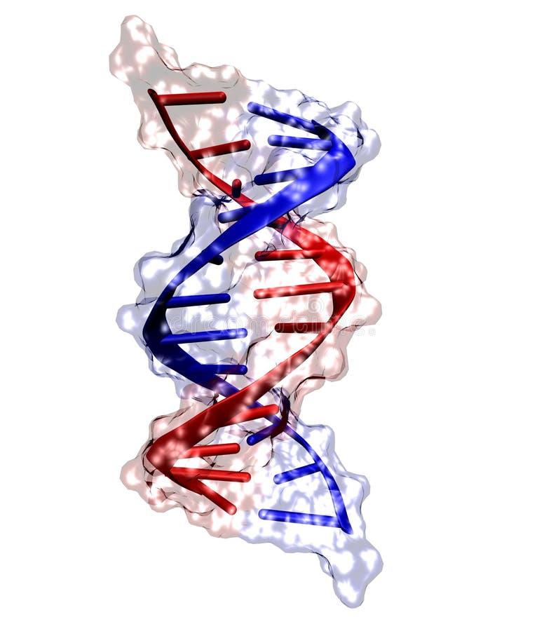 ADN sur le blanc photographie stock