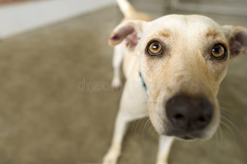 Adoção do cão do abrigo imagem de stock