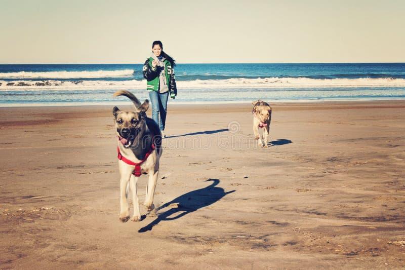 Adolescent et chiens images libres de droits