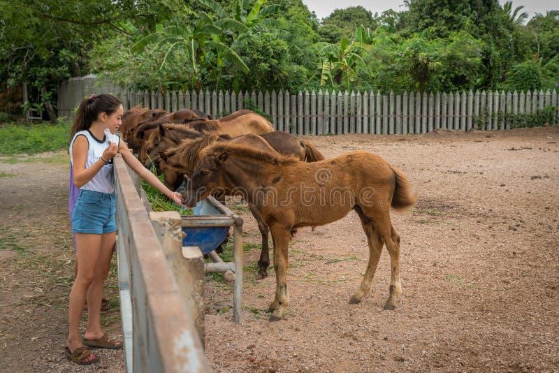 Adolescente alimentando um cavalo do bebê foto de stock