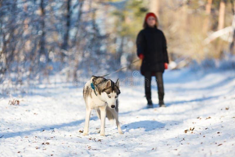 Adolescente com um cão ronco fotos de stock royalty free