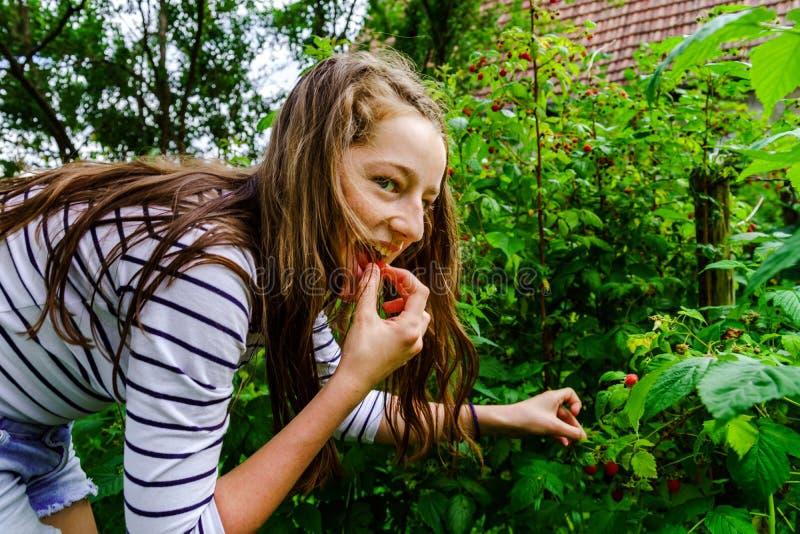 Adolescente que come la frambuesa en el jardín imagen de archivo