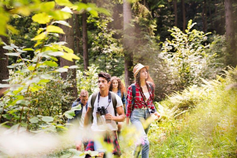 Adolescentes com as trouxas que caminham em férias de verão da floresta imagens de stock