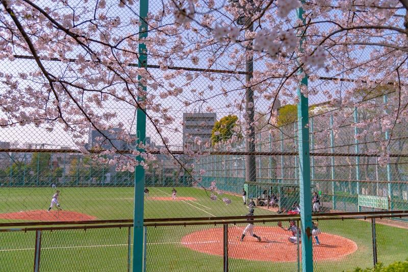 Adolescentes que juegan a béisbol en la estación de la flor de cerezo en Tokio, Japón imágenes de archivo libres de regalías