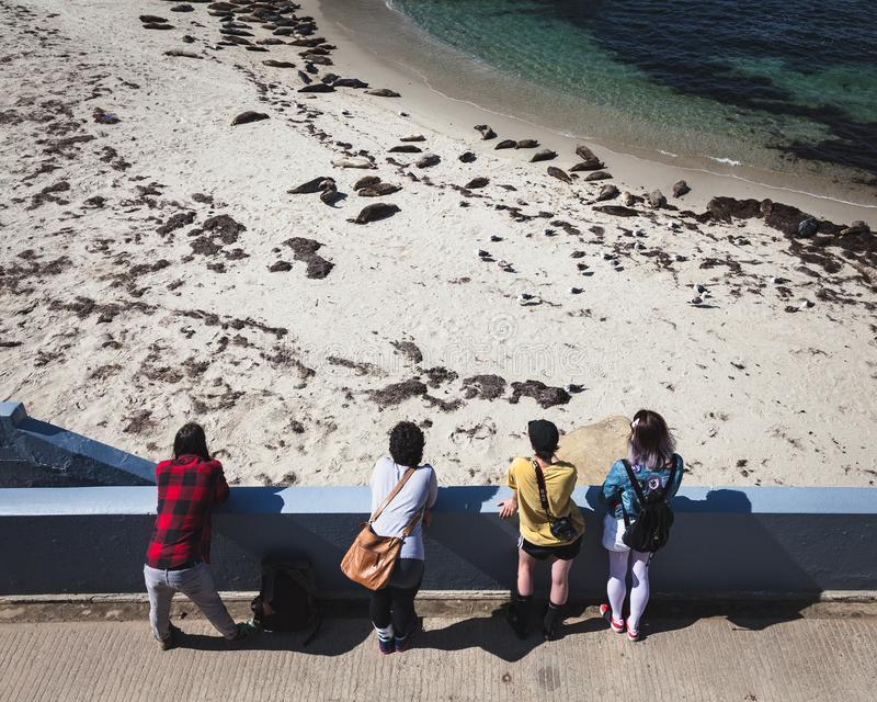 Adolescentes que miran leones del sello en La Jolla California foto de archivo
