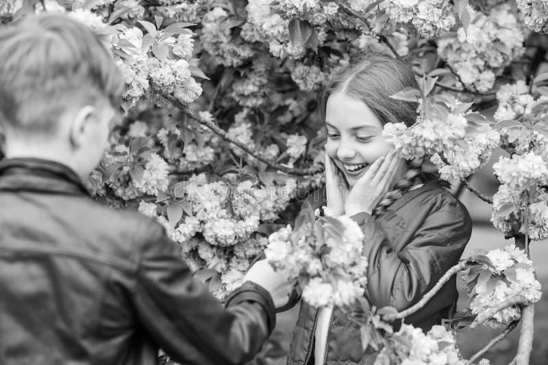 Adolescentes rom?nticos Crian?as que apreciam a flor de cerejeira cor-de-rosa Flor macia Acople crian?as em flores do fundo da ?r fotos de stock
