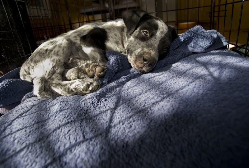 Adopte este perrito. imagenes de archivo