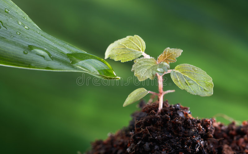 Download Adopted stock photo. Image of fresh, plant, drop, sacrifice - 7487084