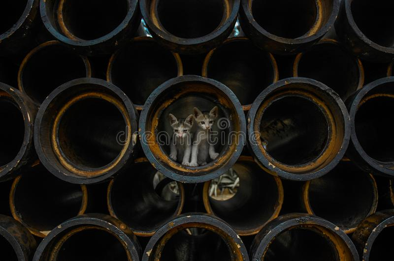 Kittens in pipes stock images