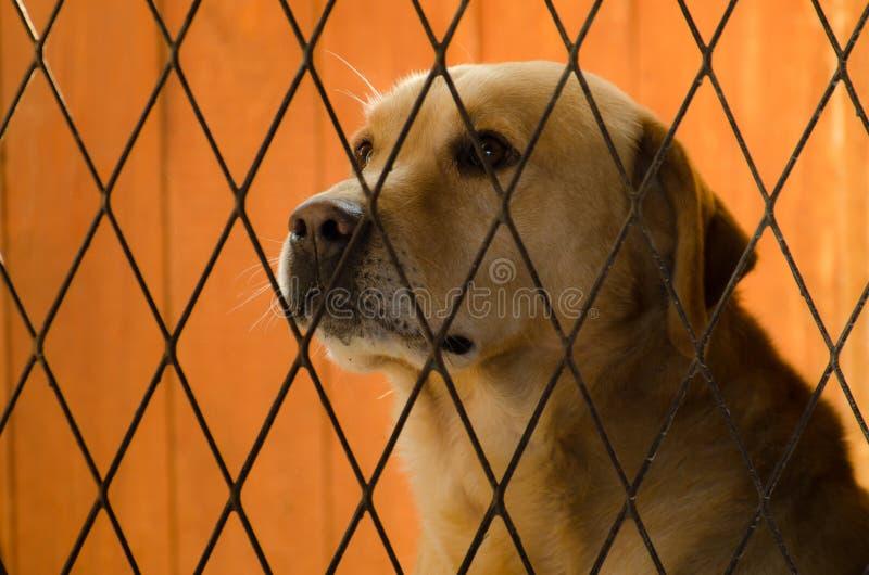 Adoption royalty free stock image