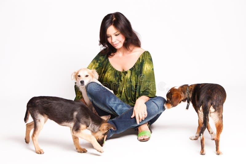Download Adoptowani psy obraz stock. Obraz złożonej z zwierzęta - 21556315