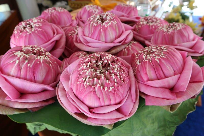 Adoração de Lotus e bonito de flores cor-de-rosa para o templo fotos de stock royalty free